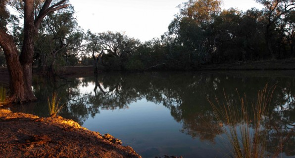 Currawah below Bourke, NSW