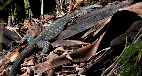 Nightcap National Park, far north coast, NSW